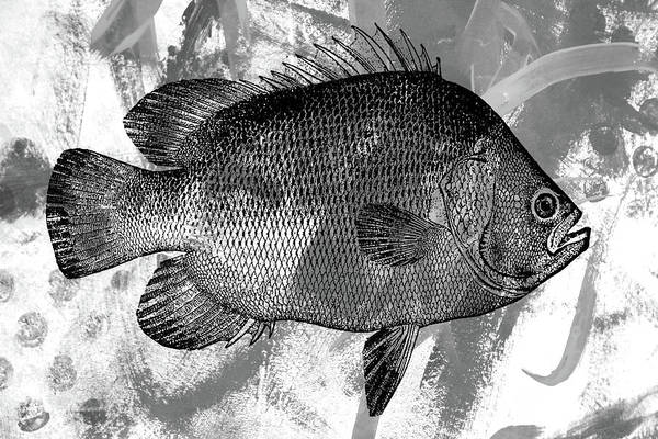 Semis Digital Art - Gray Fish by Nancy Merkle