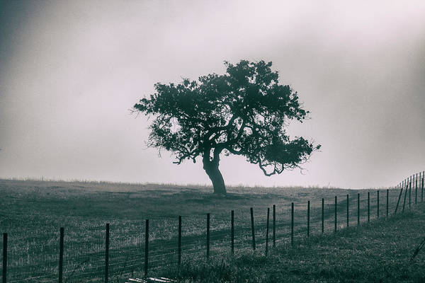 Photograph - Gray Sky Morning by Mike Trueblood