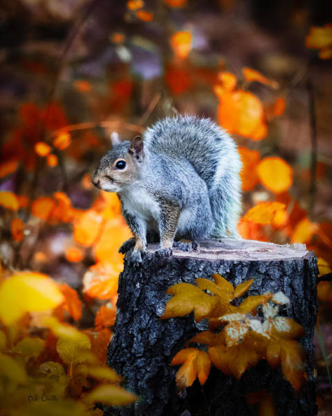 Photograph - Gray Squirrel On A Tree Stump by Bob Orsillo