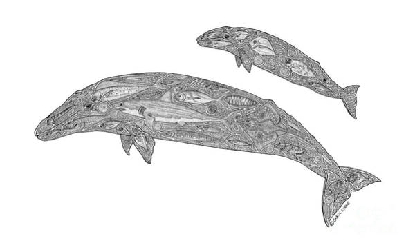 Wall Art - Drawing - Gray Whale And Calf by Carol Lynne