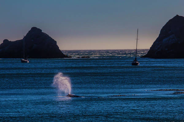 Blowhole Photograph - Gray Whale In Calm Bay by Garry Gay