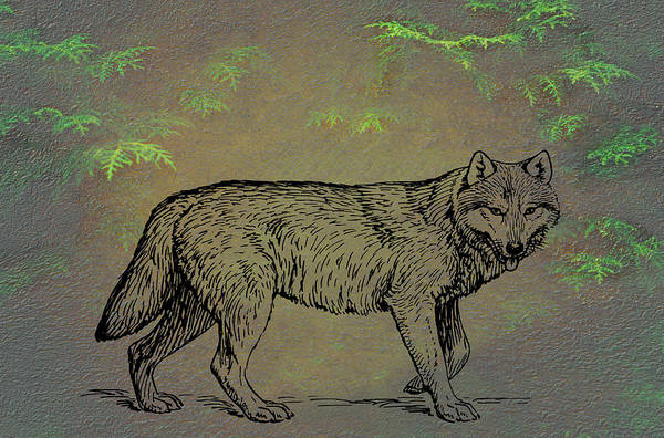 Mixed Media - Gray Wolf Timber Wolf Western Wolf by Movie Poster Prints