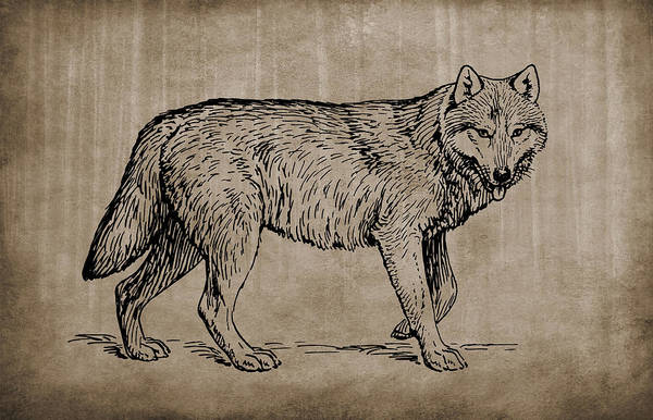 Mixed Media - Gray Wolf Timber Wolf Western Wolf Woods Texture by Movie Poster Prints
