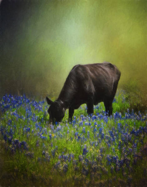 Texas Bluebonnet Photograph - Grazing Among The Bluebonnets by David and Carol Kelly