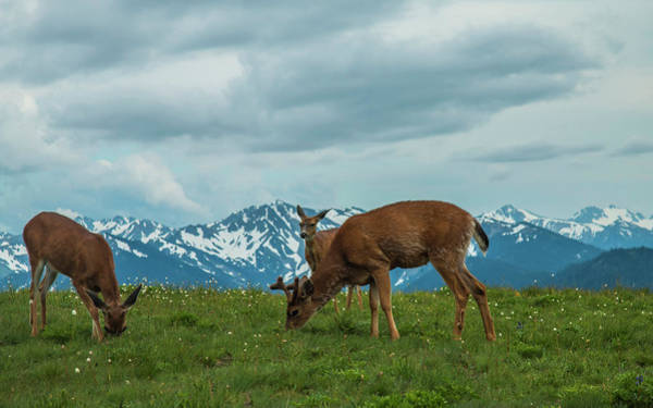Photograph - Grazing In The Clouds by Doug Scrima