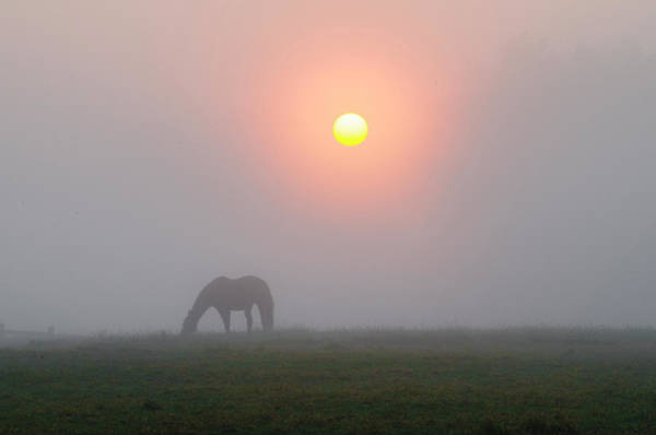Wall Art - Photograph - Grazing Horse In A Foggy Sunrise by Bill Cannon