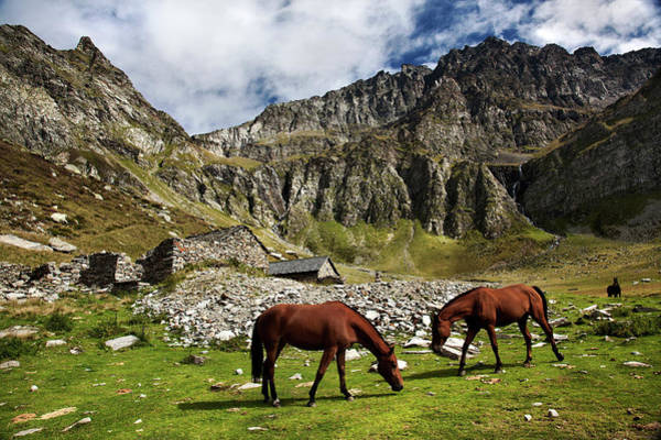Moberly Photograph - Grazing Horses by Guy Moberly