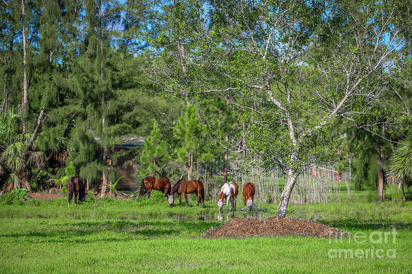Photograph - Grazing Horses by Tom Claud