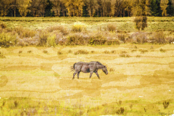 Photograph - Grazing In The Fall by Teresa Wilson