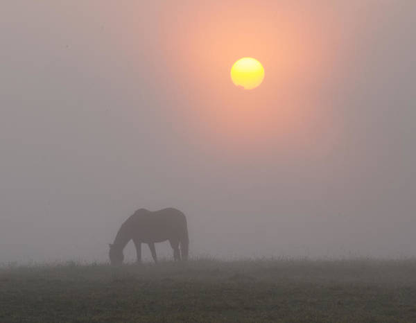 Wall Art - Photograph - Grazing In The Fog by Bill Cannon