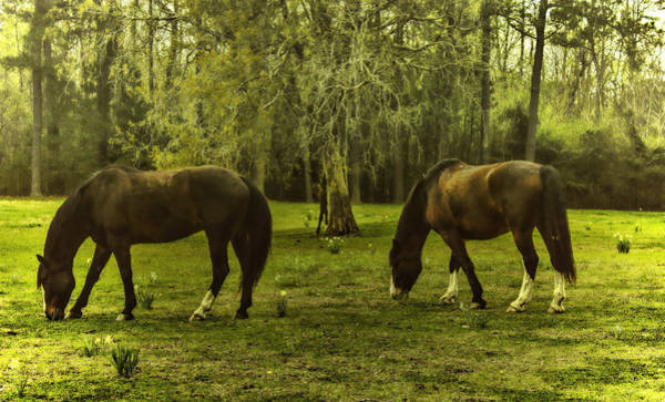 Photograph - Grazing In The Grass by Ola Allen