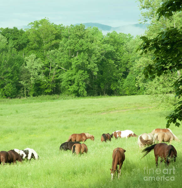 Grazing In The Morning Art Print