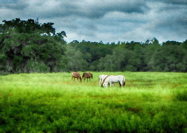 Photograph - Grazing by Judy Hall-Folde