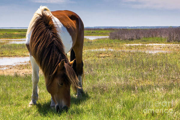 Photograph - Grazing by Rod Best