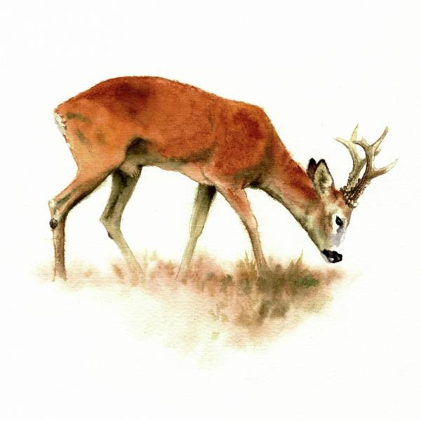 Grazing Roebuck Watercolor Art Print