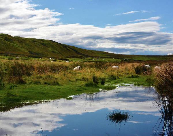 Photograph - Grazing Sheep by Coleman Mattingly