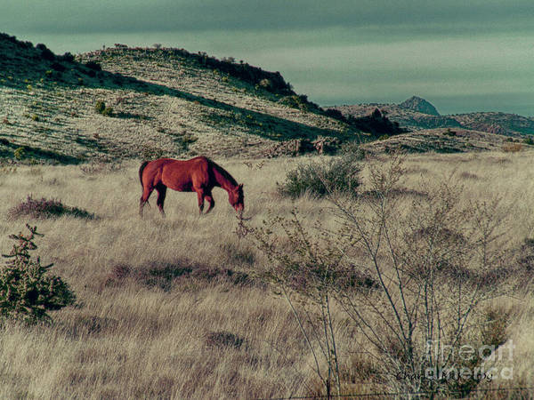 Photograph - Grazing Solo by Charles McKelroy