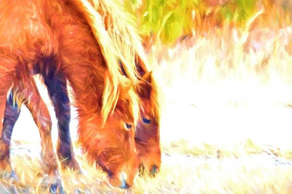 Photograph - Grazing Together by Alice Gipson