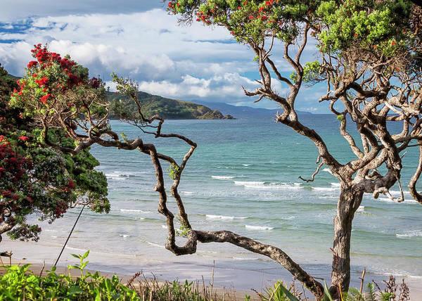 Wall Art - Photograph - Great Barrier Island New Zealand View by Joan Carroll