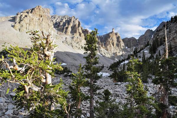 Photograph - Great Basin Bristlecone Pine Grove by Kyle Hanson