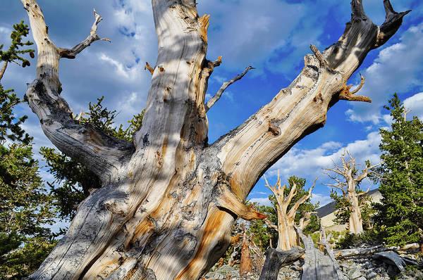 Photograph - Great Basin Bristlecone Pine by Kyle Hanson