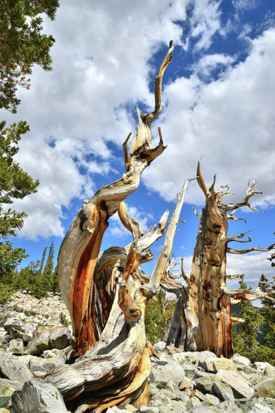 Photograph - Great Basin National Park by Ray Mathis