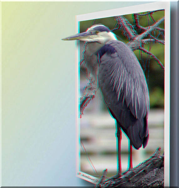Anaglyph Photograph - Great Blue Heron - Red-cyan 3d Glasses Required by Brian Wallace