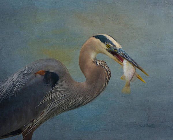 Wall Art - Photograph - Great Blue Heron And Catch by Sandi OReilly