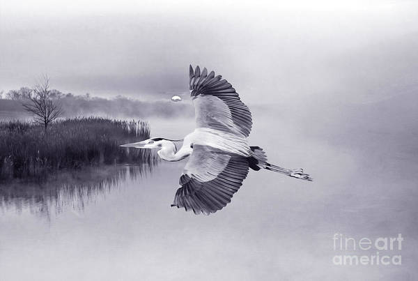 Marshland Photograph - Great Blue Heron At Sunset Bw  by Laura D Young