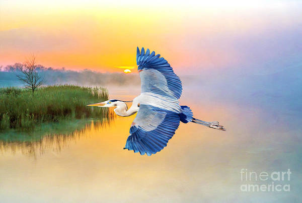 Great Blue Heron Wall Art - Photograph - Great Blue Heron At Sunset by Laura D Young