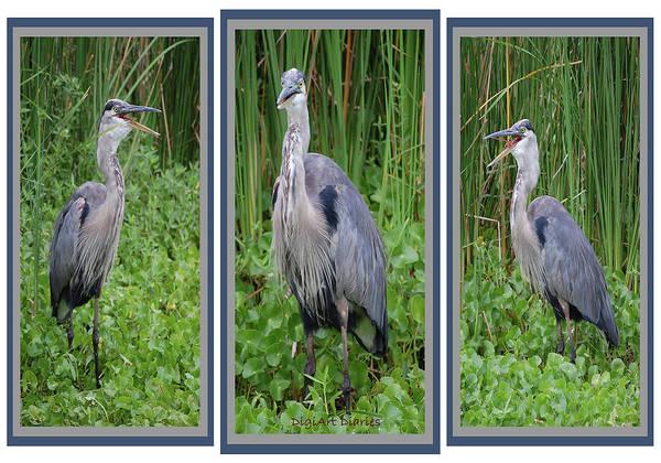 Mangroves Digital Art - Great Blue Heron Collage by DigiArt Diaries by Vicky B Fuller