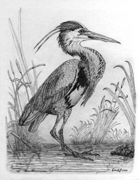Great Blue Heron Drawing - Great Blue Heron by Cynthia  Lanka