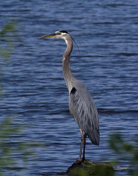 Photograph - Great Blue Heron Dmsb0001 by Gerry Gantt