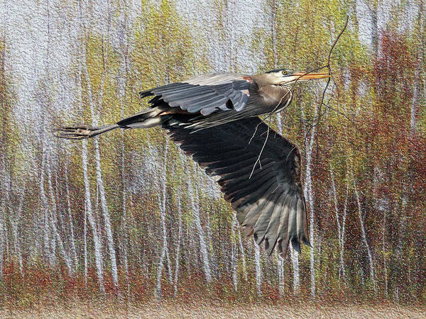 Photograph - Great Blue Heron Flight by Patti Deters