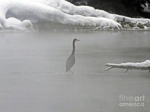 Photograph - Great Blue Heron In The Fog by Cindy Murphy - NightVisions