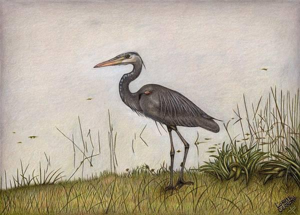 Great Blue Heron Drawing - Great Blue Heron by Lorrie Cerrone
