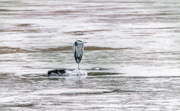 Photograph - Great Blue Heron On A Frozen Lake by Patrick Wolf