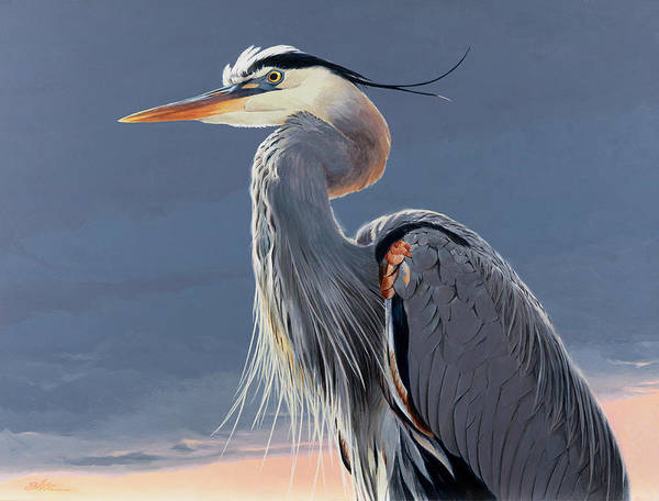Great Blue Heron Wall Art - Painting - Great Blue Heron by Shawn Shea