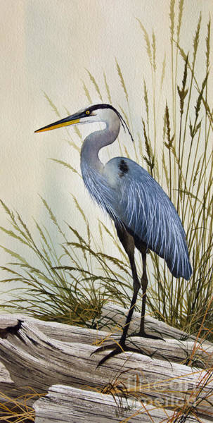 Framed Painting - Great Blue Heron Shore by James Williamson