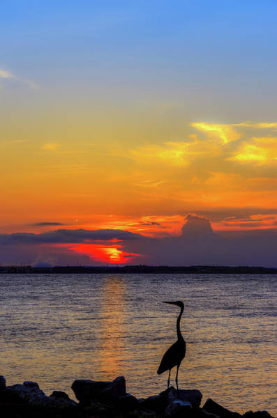 Photograph - Great Blue Heron Silhouette by Patrick Wolf