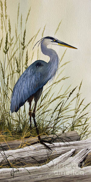 Framed Painting - Great Blue Heron Splendor by James Williamson