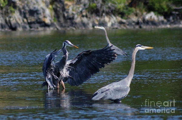 Painting - Great Blue Herons by Sue Harper