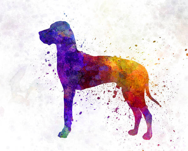 Mastiff Painting - Great Dane 01 In Watercolor by Pablo Romero