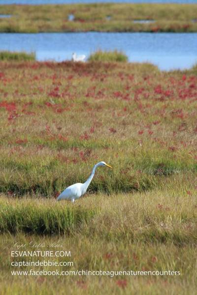 Photograph - Great Egret In Red by Captain Debbie Ritter