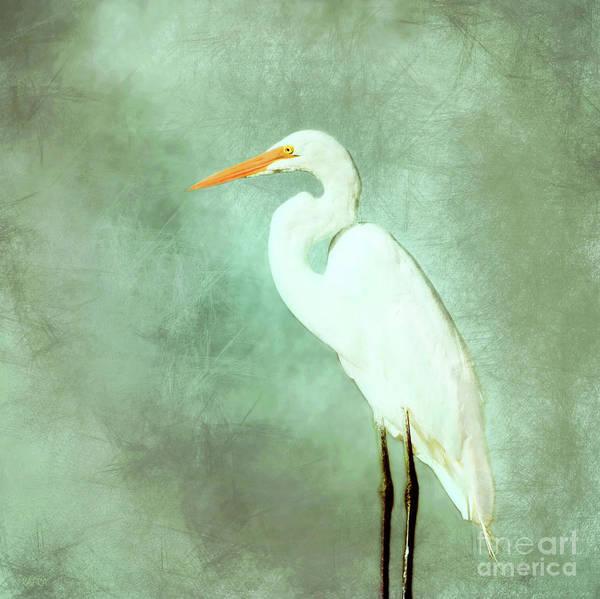 Heron Mixed Media - Great Egret by KaFra Art