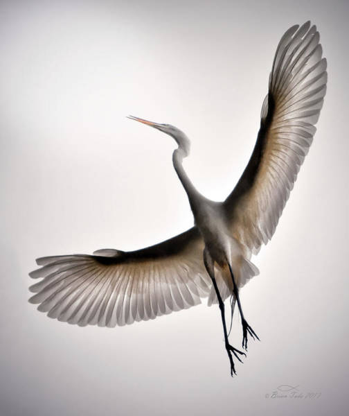 Great Egret Majesty Art Print