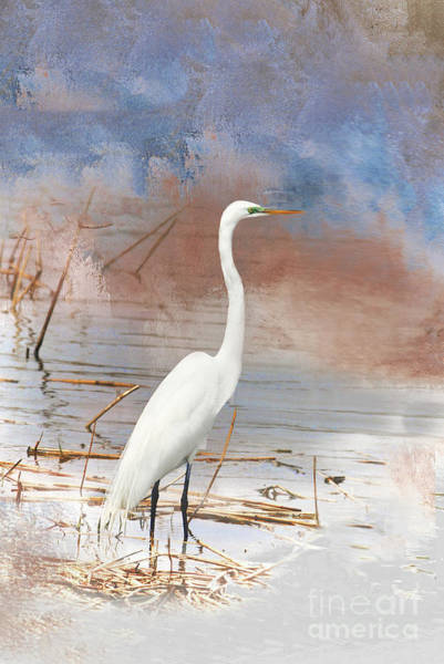 Waterbird Photograph - Great Egret - Nj Marshland by Regina Geoghan