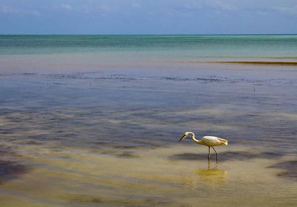 Photograph - Great Egret On Vast Horizon by Bob Slitzan