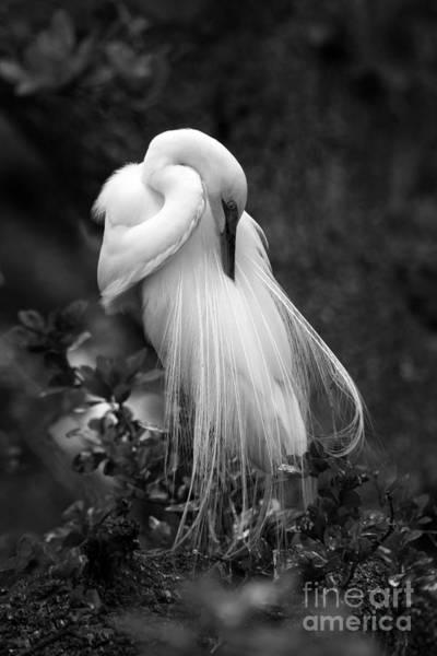 Photograph - Zen Tree  by John F Tsumas