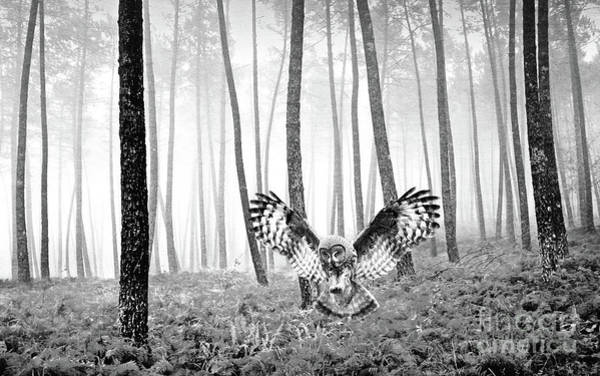 The Grey Photograph - Great Grey Owl Bw by Laura D Young